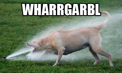 """A dog (possibly a golden retriever) barking directly into a lawn sprinkler, captioned WHARRGARBL"""